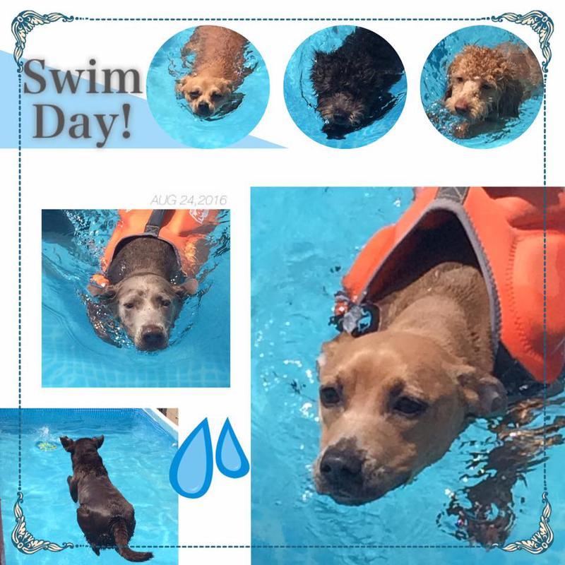 Lax Dog Day Care